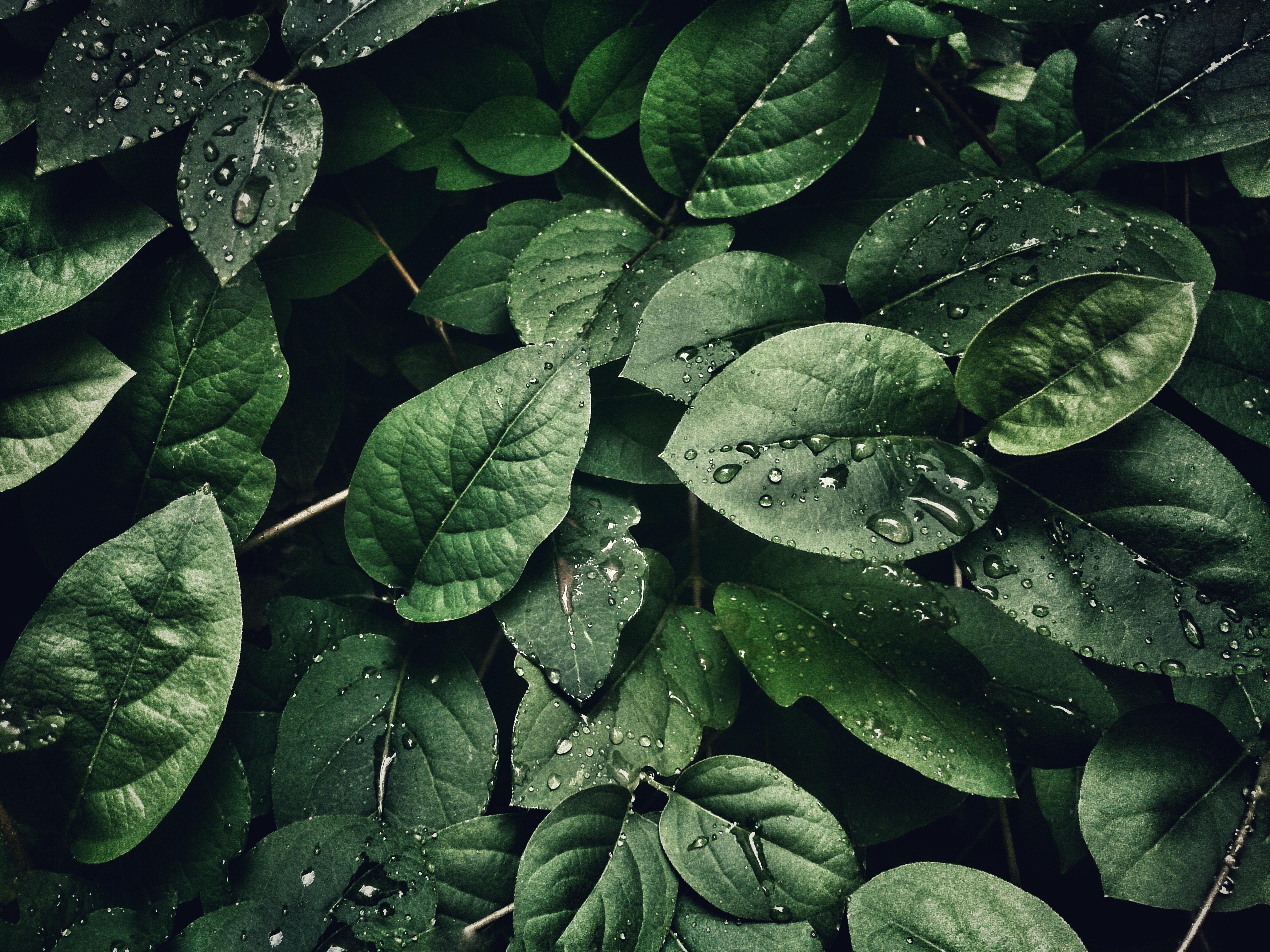 4k-wallpaper-close-up-dew-807598